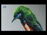 Произведения искусства на стенах омских зданий