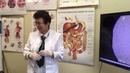 Профилактика заболеваний желудочно кишечного тракта у детей