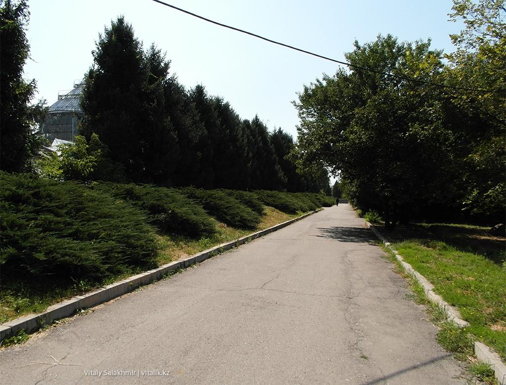 Дорога-аллея внутри Ботанического сада Алматы 2018
