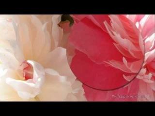 ����� �������� ������ ��� ���� � �����. ��������.������.Peony flowers.