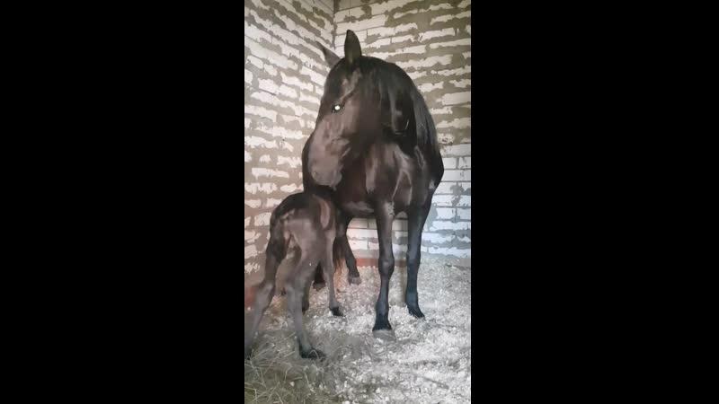 Кармелита и сынок Миро - 30.05.2019г.р.