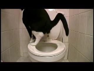 Кот провалился в свой туалет. Приколы про кошек. Юмор+#$@*.