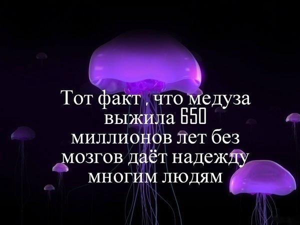 https://pp.vk.me/c614918/v614918605/16335/kYddlRiXbqI.jpg