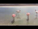 Розовые фламинго 😍🌸🌷