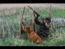 Вечерняя охота на утку 16 10 2016
