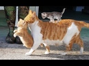 Mother cats protecting their cute kittens   Mom Cat Loves Kittens compilation 2018