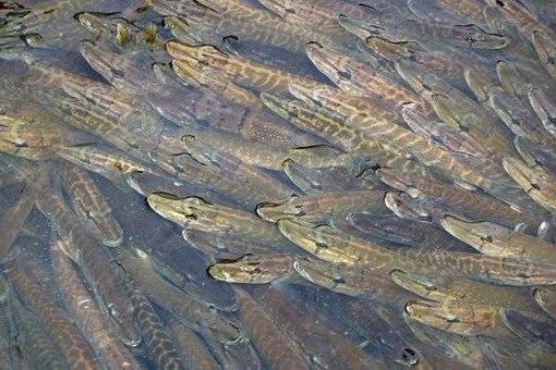 приманки для ловли рыбы в черном море