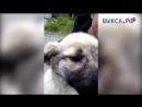 Выкса РФ Пять причин взять собаку из приюта