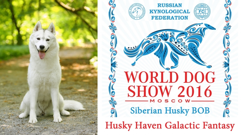 World Dog Show 2016 Husky Haven Galactic Fantasy