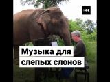 Музыка для слепых слонов