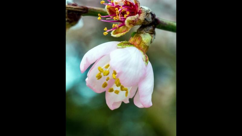 Макросъемка цветов и насекомых на nikon D5200