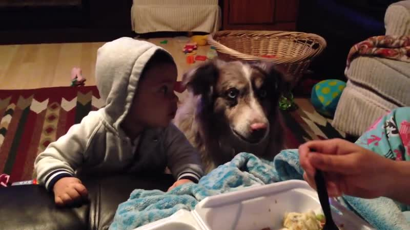 Dog says mama and baby cant