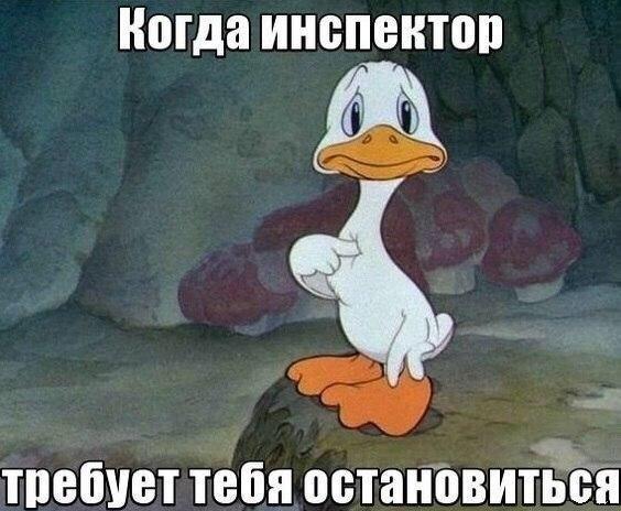 Фото №456261428 со страницы Алены Филипенко