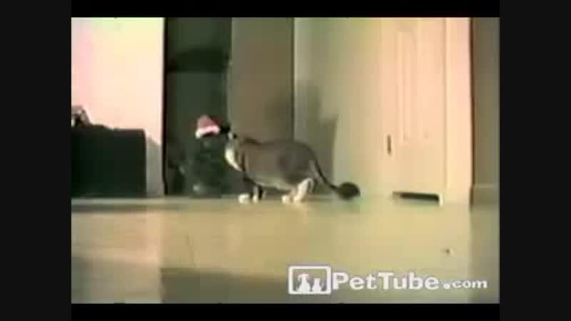 напужали кота=