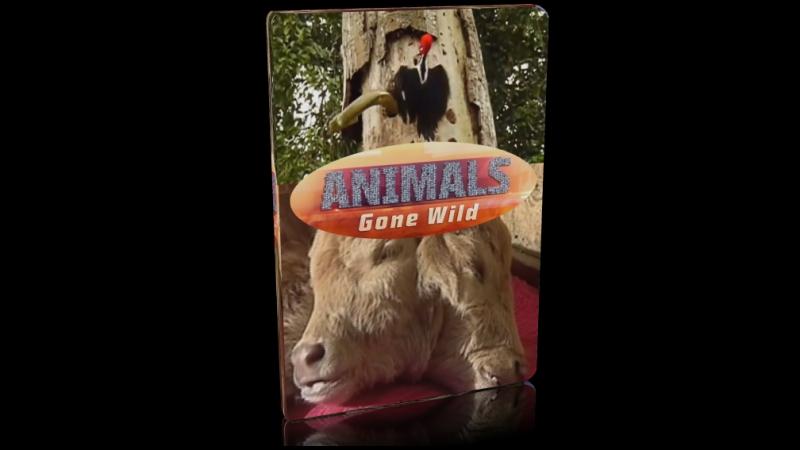 Животные без правил / серия 8 из 9 / Сорвиголовы / 2015 / Full HD