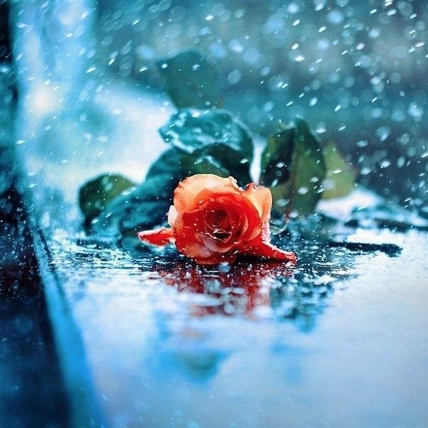 Цветы в фотографиях от Barbara Florczyk