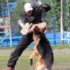 Собака служит человеку!