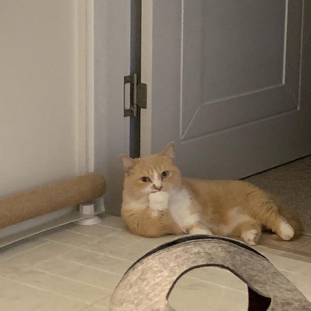 – Привет, котик! Что поделываешь? – Все, что ни делается, я и не делаю...