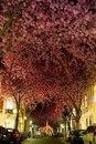 Cамые волшебные улицы мира, украшенные деревьями и цветами