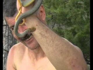 Укусившая в губу змея