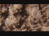 Како под микроскопом, какао с сахаром