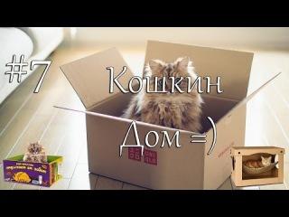 Смешные кошки и коты - лучшие видео приколы с кошками и котами 2014 #7