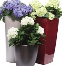Комнатные цветы и растения купить спб купить букеты с бесплатной доставкой по минску