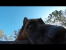Mischievous Dog Refuses to Give GoPro Back