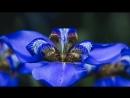 Релакс Синие оттенки Заказ видео через сообщения группы