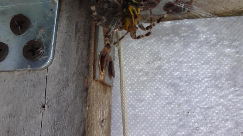 павук 2