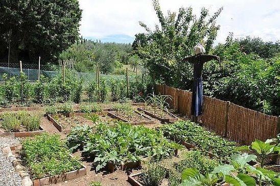 Народные приметы для садоводов и огородников