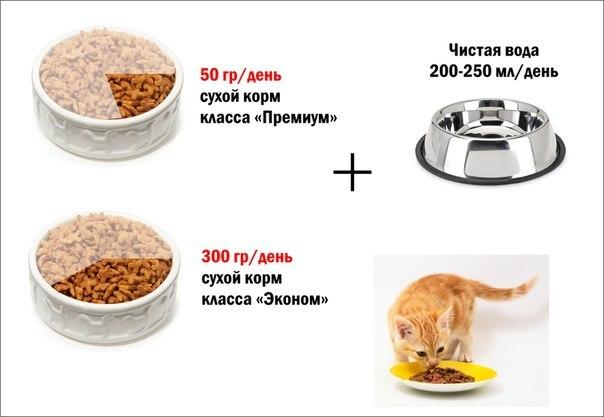 Сколько грамм нужно давать коту