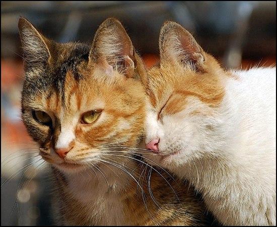 картинки с котами про любовь: