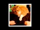 Коты завлекаются 3 серия