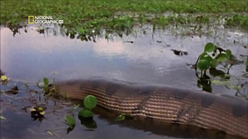 Самые опасные животные Амазония 2009