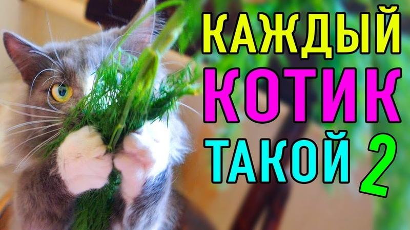 КАЖДЫЙ КОТИК ТАКОЙ 2   ПАРОДИЯ Magic Pets