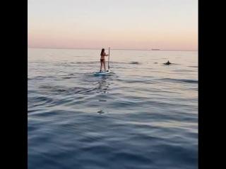 Мысхако и дельфины