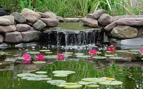 Вьюны в саду фото