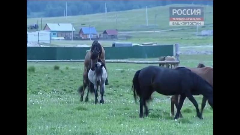 А лошадям пофиг на всё и всех