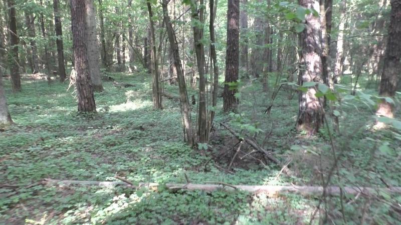 Сморгонь. Лес-8 (Дискордия). Neu-Schwartau
