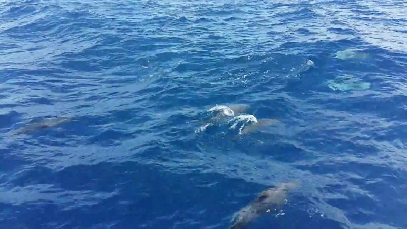 Дельфины) Они свободны, они плывут, куда хотят!