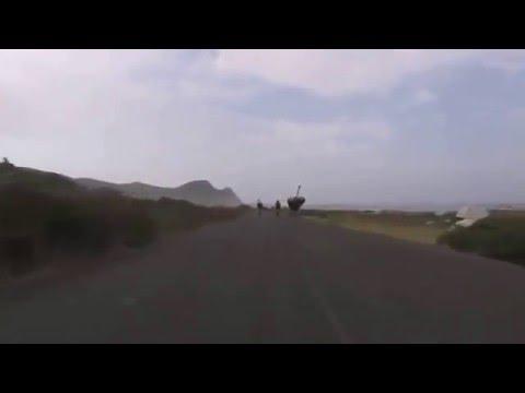 Avestruz persegue ciclistas a 50km em Pista