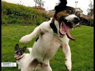 Приколы с животными. Такие смешные собаки!) Смешно до слез!)