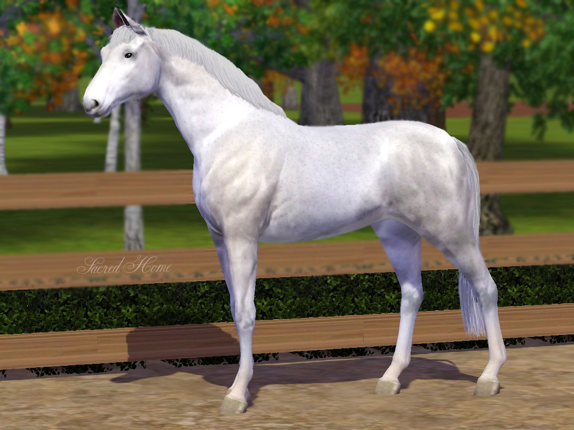 Регистрация лошадей в RHF 1.1 - Страница 2 QU-1Qg79k10