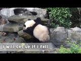 Nico: I will get up if I fall; my white socks will help me make it through! | iPanda