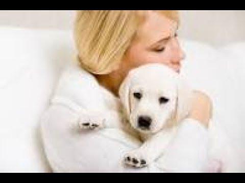 Regalo un cachorro a su esposa, pero años después se arrepintió para toda su vida FINAL INESPERADO