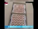 Китае сделать волшебные яйцо химия. Смотрите всех