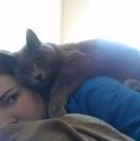 Коты, которые не знакомы с понятием Личное пространство.