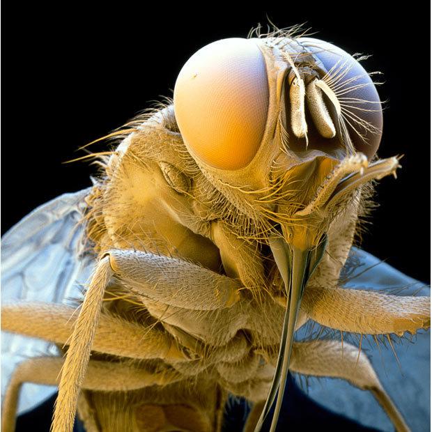 Они живут среди нас - Досье видов и макро фотографии.