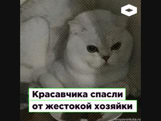 В Вокруте кота Красавчика спасли от жестокого обращения | ROMB